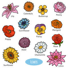 Vector set of flowers, color stickers