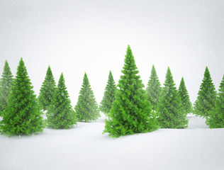 Winter scene with green pine trees and snow
