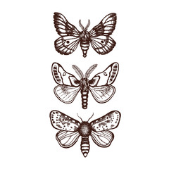 Collection of three moths. Insects in dotwork style. Hand drawn. Vector illustration.