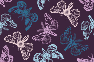 Seamless pattern with moths. Hand drawn. Vector illustration.