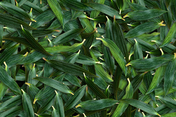 Lily leaf green overlapping background.