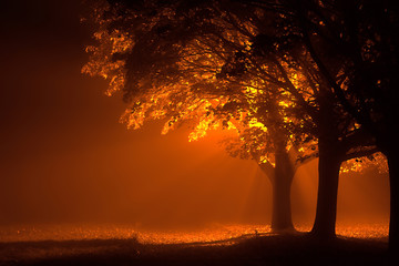 Beautiful glowing trees lit up during a misty night from a single orange streetlight behind. Autumn leaves falling on the ground with dark shadows