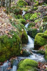 Riachuelo y rocas con musgo. Bosque El Tejedelo. Requejo de Sanabria, Zamora, España.