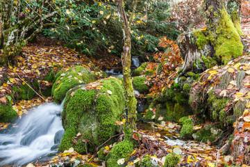 Riachuelo, rocas con musgo y suelo con hojas. Bosque El Tejedelo. Requejo de Sanabria, Zamora, España.