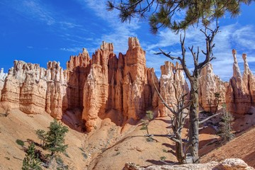 Dry tree and stone Hoodoos in Bryce Canyon National Park.