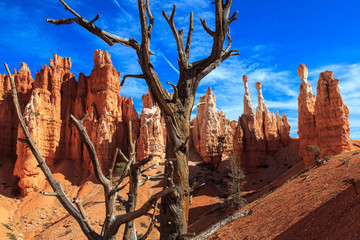 Dry tree and stone Hoodoos.