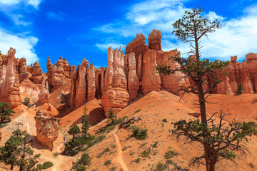Stone Hoodoos in Bryce Canyon National Park.
