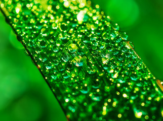 Water drops on green leaf in the morning light.