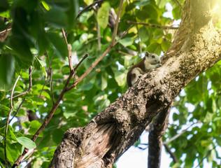 squirrel sitting on a high tree