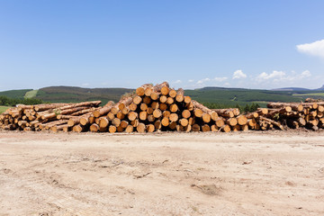 Forestry Trees Logs Harvest stacks on mountain landscape
