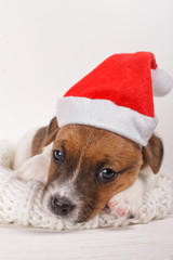 Cute Small Puppy Wearing Santa Hat and Lying on Soft Natural Wool Sweater over White Background. New Year Dog looking at camera Over Soft Cozy Holiday Background at Home. Sadness Depression on Holiday