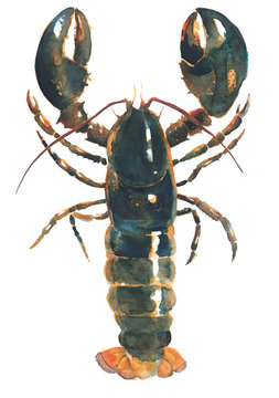 Lobster live lobster watercolor painting illustration isolated on white background
