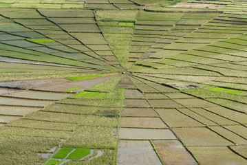 Rice field in spider's web shape, Region of Ruteng, Flores Island, Indonesia, Southeast Asia, Asia