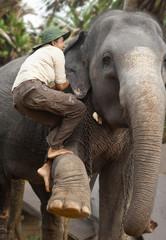 Sri Lankan woman climbing up an Asian elephant, Sri Lanka, Asia