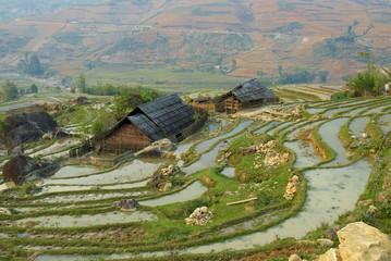 Terraced rice fields, Sapa area, North Vietnam, Vietnam, Indochina, Southeast Asia, Asia