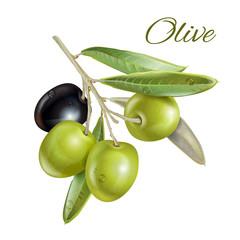 Olive horizontal banner