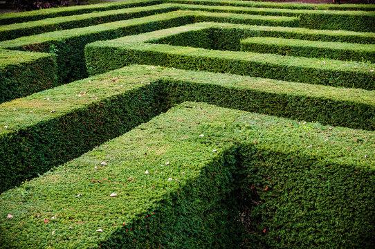 Grass lawn cut into a maze like puzzle pattern