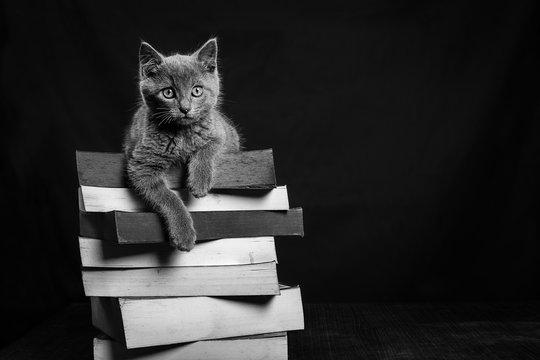 Un chaton gris couché sur une pile de livre en noir et blanc