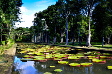 Giant water lilies in Pamplemousses garden, Mauritius