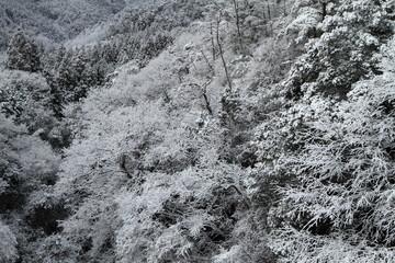 雪の雑木林