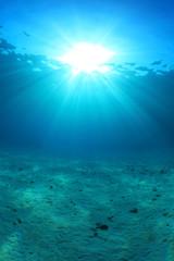 Sandy sea floor