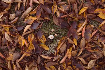 Funghi tra le foglie in autunno