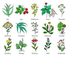 Hand drawn medical herbs and plants vector illustration on white