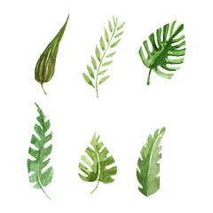 Tropical leaves set Watercolor image