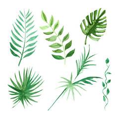 Tropical leaves set Watercolor image