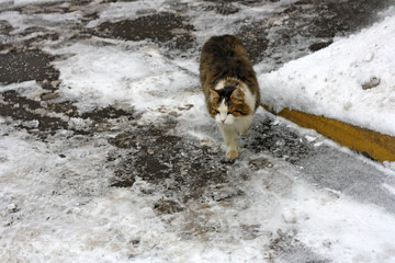 The cat goes in the snow.