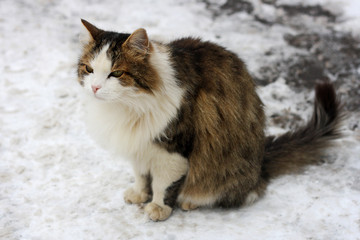 Cat sitting in the snow.