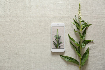Plant and smartphone on white textile background