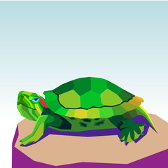 vector animal turtle illustration reptile cartoon nature