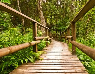 Wanderweg über eine Holzbrücke im grünen Wald