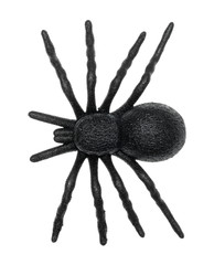 Plastic toy spider top view isolated on a white background.
