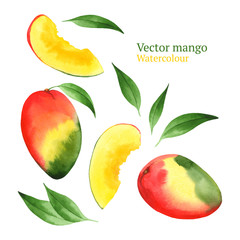 Watercolor vector mango