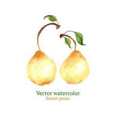 Watercolor vector pears