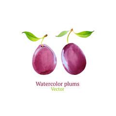 Watercolor vector plums