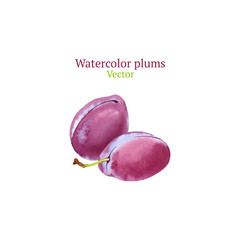 Watercolor vector plums
