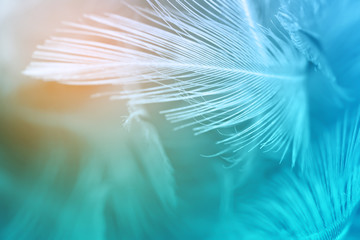Green turquoise and blue color trends chicken feather texture background,Light orange Wall mural