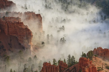 Fog, rocks and trees, Bryce Canyon National Park, Utah, United States of America, North America