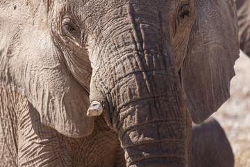 Elephant - Etosha Safari Park in Namibia