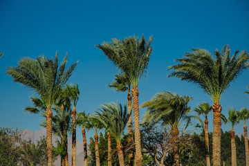palms blue sky green trees tropical location beautiful view