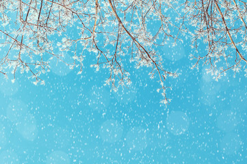 Winter landscape - snowy branches of the winter tree on the background of the sunny sky under snowfall
