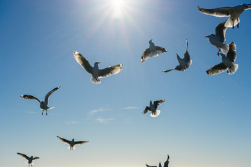 Silhouette image of flying seagulls