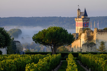 Castle of Chinon among the vineyards, UNESCO World Heritage Site, Chinon, Indre et Loire, Centre, France, Europe