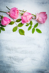 Beautiful pink roses on white painted background, vintage style