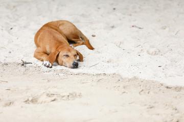 Dog sleeping on the shore of the island