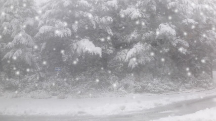 Blurred snowing background with pine forest.