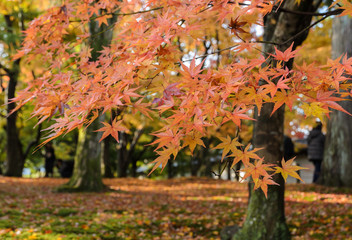 Autumn color leaves at Tofukuji temple in Kyoto, Japan
